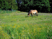 Horse on a colorful flower meadow — Stock Photo