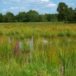 Stock Photo: Romantic bog in nature reserve area
