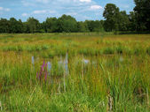 Romantic bog in a nature reserve area — Stock Photo