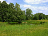 Pond with cattails in the foreground — Stock Photo