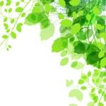 Fresh green leaves background - vector illustration — Stock Vector #9111027