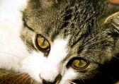 Cateyes — ストック写真