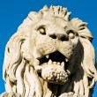 Stone lion of Chain Bridge in Budapest — Stockfoto #10122913