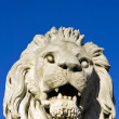 The stone lion of the Chain Bridge in Budapest — Stock Photo