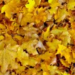 Yellow leaves — Stock Photo #10260846