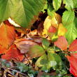Colorful autumn leaves — Stok fotoğraf