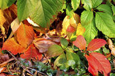 Colorful autumn leaves — Stock Photo