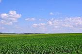 Sädesfälten — Stockfoto