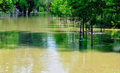 Flood on the river Danube — Stock Photo