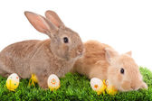 Baby rabbits and easter eggs — Stock Photo