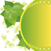 Eco background with fresh green leaves and sun — Stock Vector