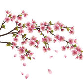 樱花盛开-日本樱花树上白 backgrou 隔离 — 图库矢量图片