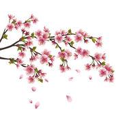 Sakura bloesem - japanse kersenboom geïsoleerd op witte chtergro — Stockvector