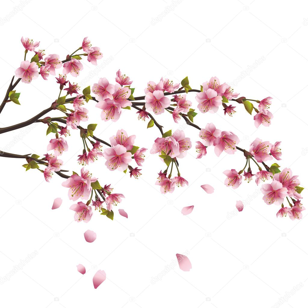 Realistic sakura blossom - Japanese cherry tree with flying petals isolated on white background — Stock Vector #8966311