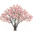 Japanese cherry tree blossom over white — Stock Vector