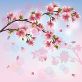 Sakura blossom - Japanese cherry tree background — Stock Vector