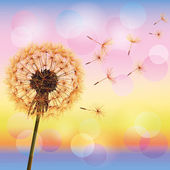 Dandelion on background of sunset — Stock Vector