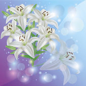 White lily flower background, greeting or invitation card — Stock Photo