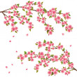Sakura blossom - Japanese cherry tree over white, vector - Stock Vector