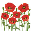 Flowers poppies isolated on white background — Stock Vector