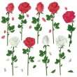 Set of flowers white and red roses over white — Stock Vector