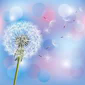 Flower dandelion on light blue - pink background — Stock Vector
