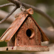 Little bird house on the branch of the pine tree — Stock Photo