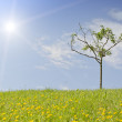 Small tree on a grassy hill — Stock Photo