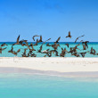 Swam of birds over tropical island beach — Stock Photo #8263560