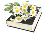 Book and daisy — Stock Photo