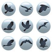 Bird icon set — Stock Vector