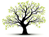 Decorative tree and green leaves, vector — Stockfoto