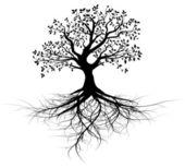 Cały czarny drzewo z korzeniami — Zdjęcie stockowe