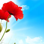 Poppies flowers and blue sky — Stock Photo