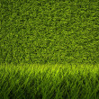 3d green grass texture, background - Stock Photo