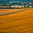 Ripe wheat field with road — Stockfoto