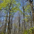 Beech forest — Photo #8011078