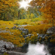 Autumn forest and stream, scenic landscape — Stock Photo