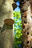 Trunks in the forest, hollows tree and fungi — Stock Photo