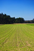 Green lines on field — Stock Photo