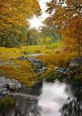 Autumn forest and stream, scenic landscape — Fotografia Stock