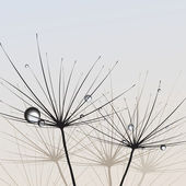 Dandelions. Vector. — Vetorial Stock