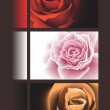 Vector banners with roses. — Stock Vector