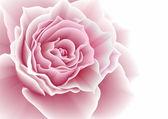 Pink rose. Vector illustration. — Stock Vector
