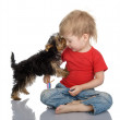 The puppy licks the child — Stock Photo