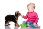 The child feeds a puppy. — Stock Photo