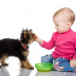 The child feeds a puppy - Stock Photo
