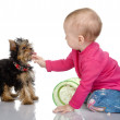 The child feeds a puppy — Stock Photo #9922432