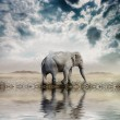 Elephant in the desert — Stock Photo #8009168