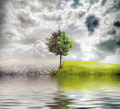 Ecology landscape — Stock Photo